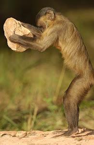 Money see, monkey do, monkey monkey is watching you...