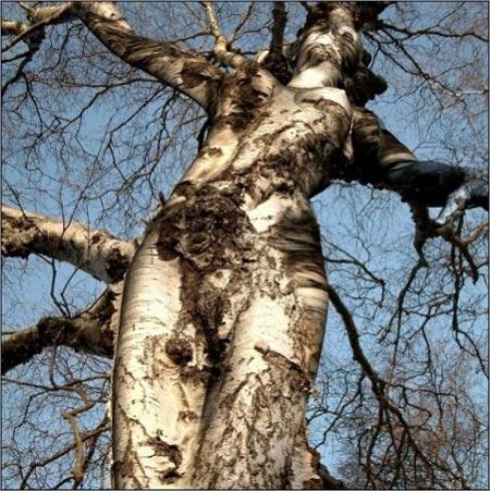 [goddess_tree.jpg]