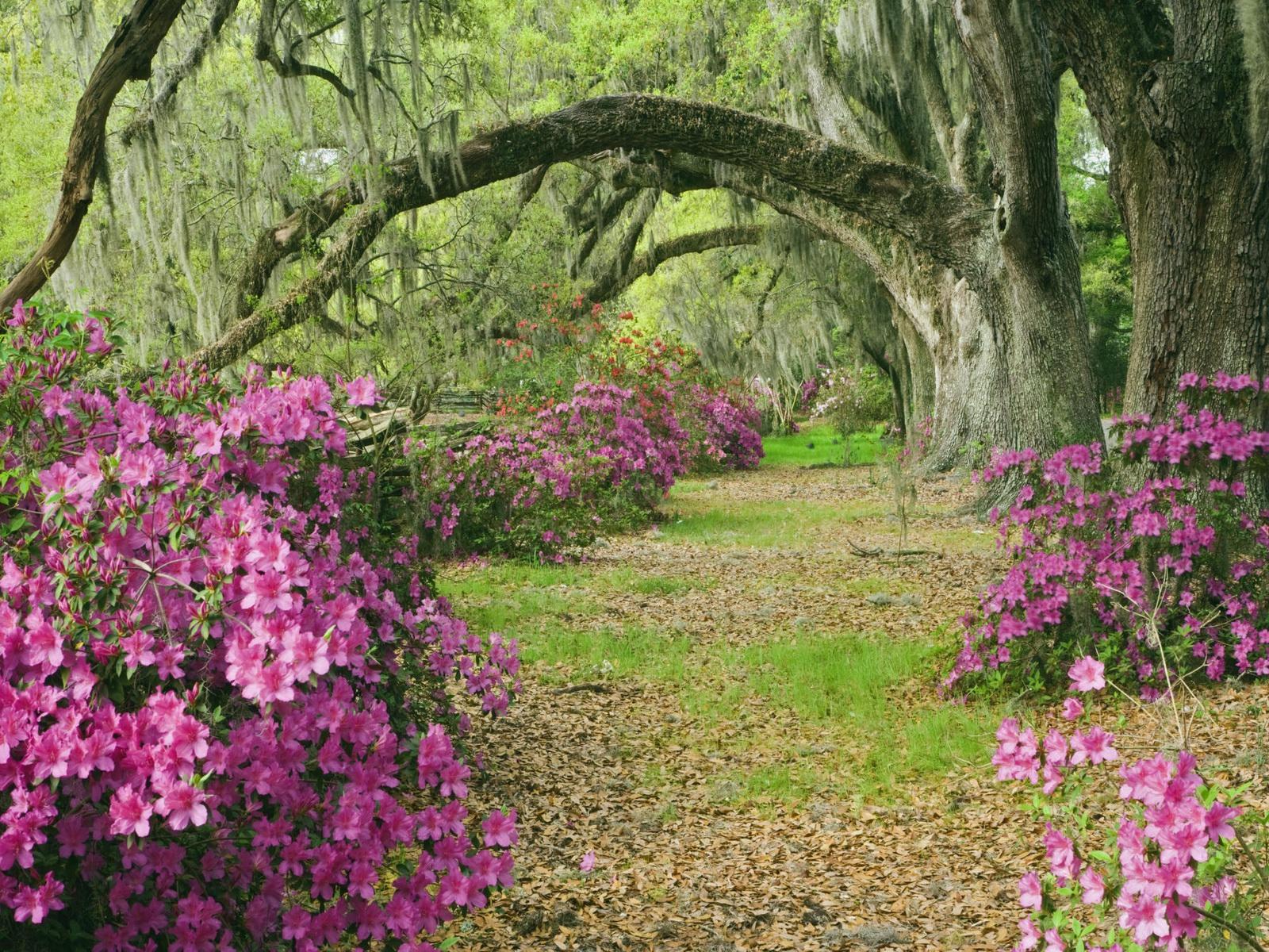 http://3.bp.blogspot.com/_wrjKYtPpnXU/TUfzcmm23OI/AAAAAAAAAtE/SUffF7FIjMs/s1600/Flower+Garden+FGAD.jpg