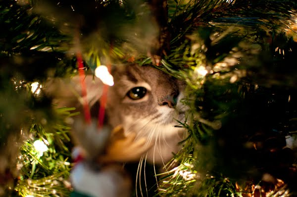 Kitten inside Christmas Tree