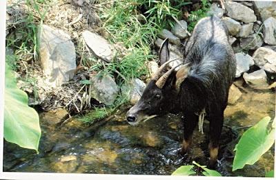 Lan Sang National Park