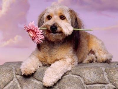 cachorro+perros