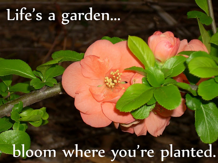 Life's A Garden, Bloom Where You're Planted