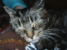 Tony cat