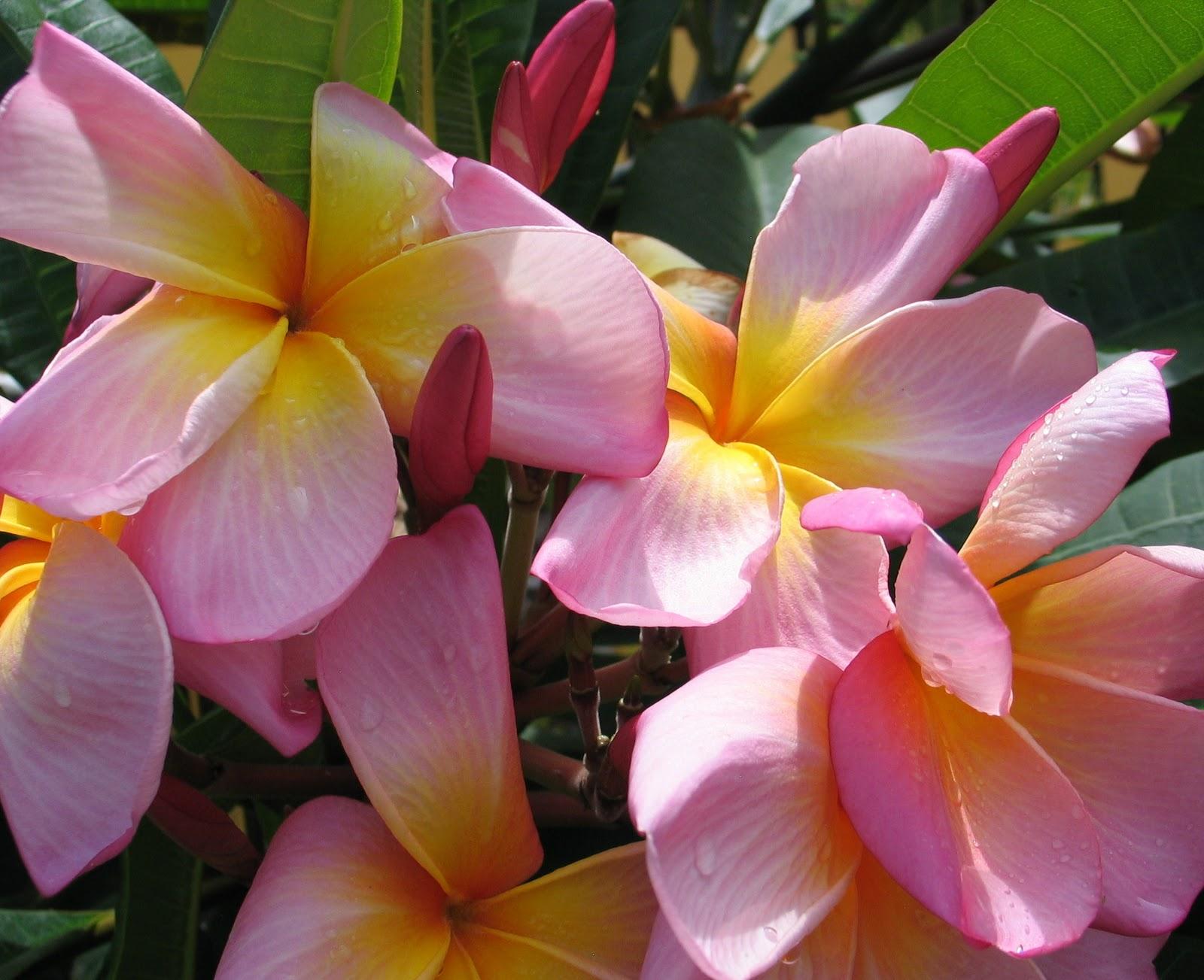 Kathy Dunham Artist & grapher Tropical Flowers