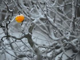 101874 salju Foto Foto Keindahan Badai Salju di Eropa
