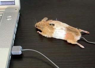 Dead Mouse mouse