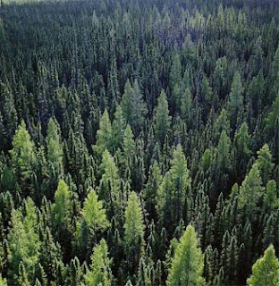 Forest aerial view