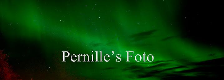 Pernille's Fotoblogg
