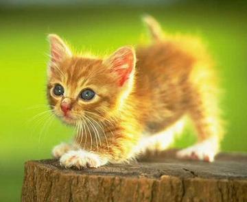 Memelihara Kucing yang Aman dari Toksoplasma