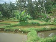 My Farm 4