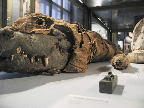 animal mummies National geographic stories take you on a journey that's always enlightening, often surprising, and unfailingly fascinating this month—egypt's animal mummies.