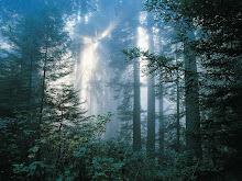El Bosque de la bruja