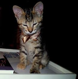 Lindo gatinho!
