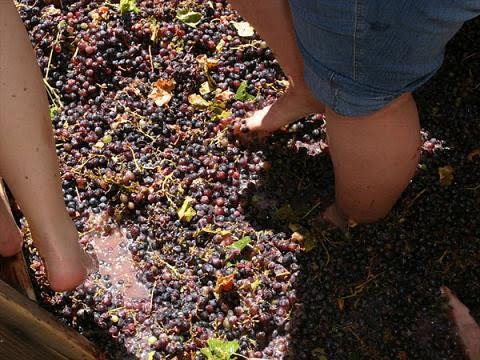 Elaboracion de Vino Casero Elaboracion de Vino Casero