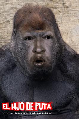imagenes que causan polemica... Hugo+chavez+gorila+maricon