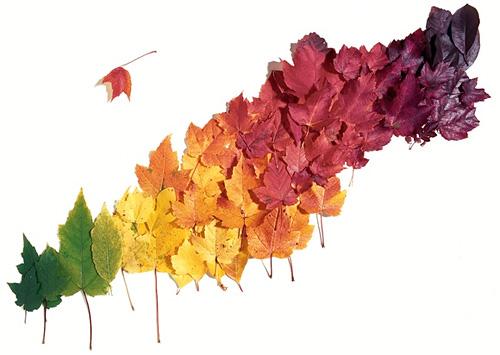 Ojo de fuego noviembre 2010 for Arboles que no se le caen las hojas en invierno