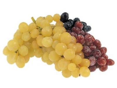 Hroznové víno sazenice