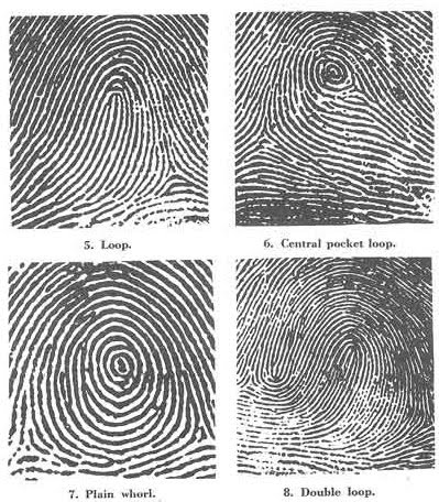 Identifying Fingerprint Patterns - Types of Fingerprints