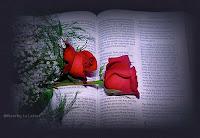 As rosas da paixão