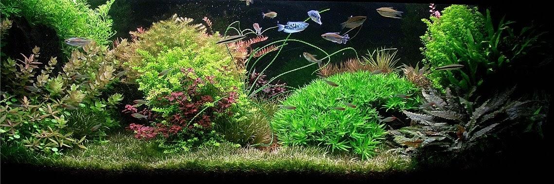 Avec 5 sens - Aquascaping - paysage aquatique en aquarium