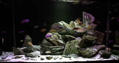 Un aquarium sans substrat nutritif  1274L+-+Mike-Senske-2002