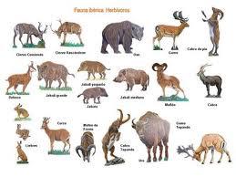 ANIMALES: ANIMALES HERBIVOROS
