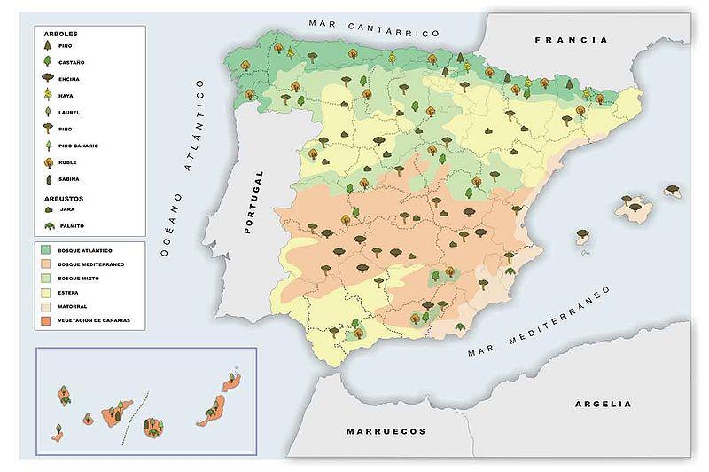 VEGETACIÓN DE ESPAÑA