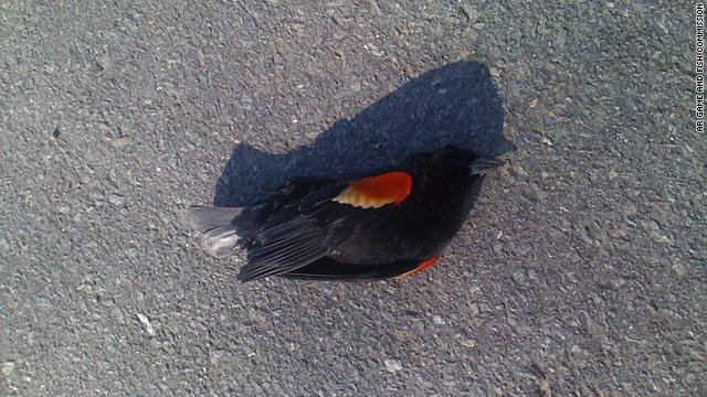 birds mystery