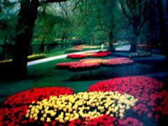 A garden for my dearest ones !