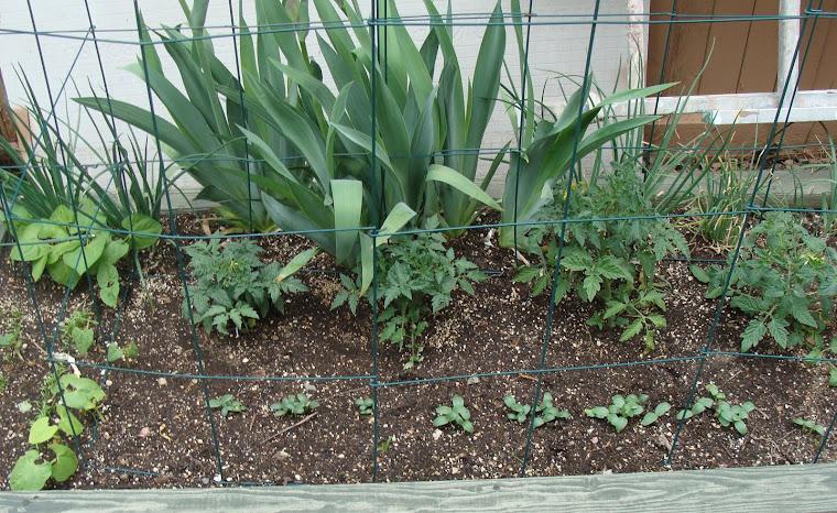 Our Tender Garden