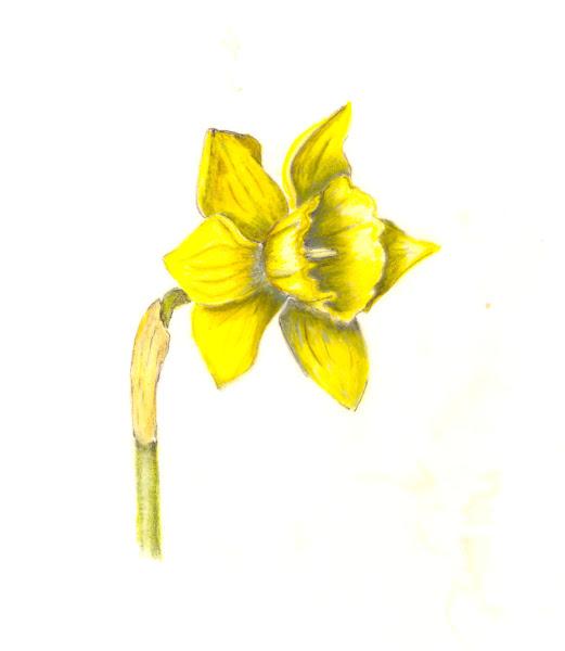 vellium color pencil
