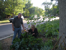 Boulevarden - A Public Garden Boulevard Project