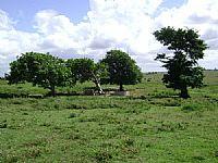 Campos de São João Batista