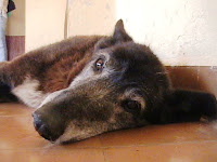Perro sin dueño