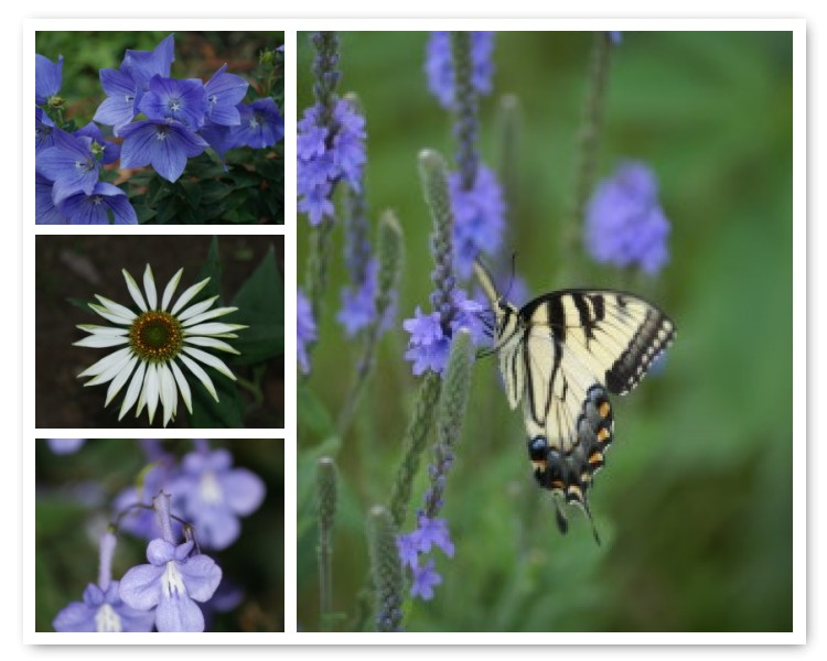 [Butterfly+and+Daisy+Mosaic]