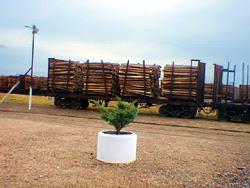 Transporte de madera en la Estación de AFE de Rivera