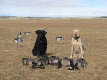 Dogs and Canada Geese