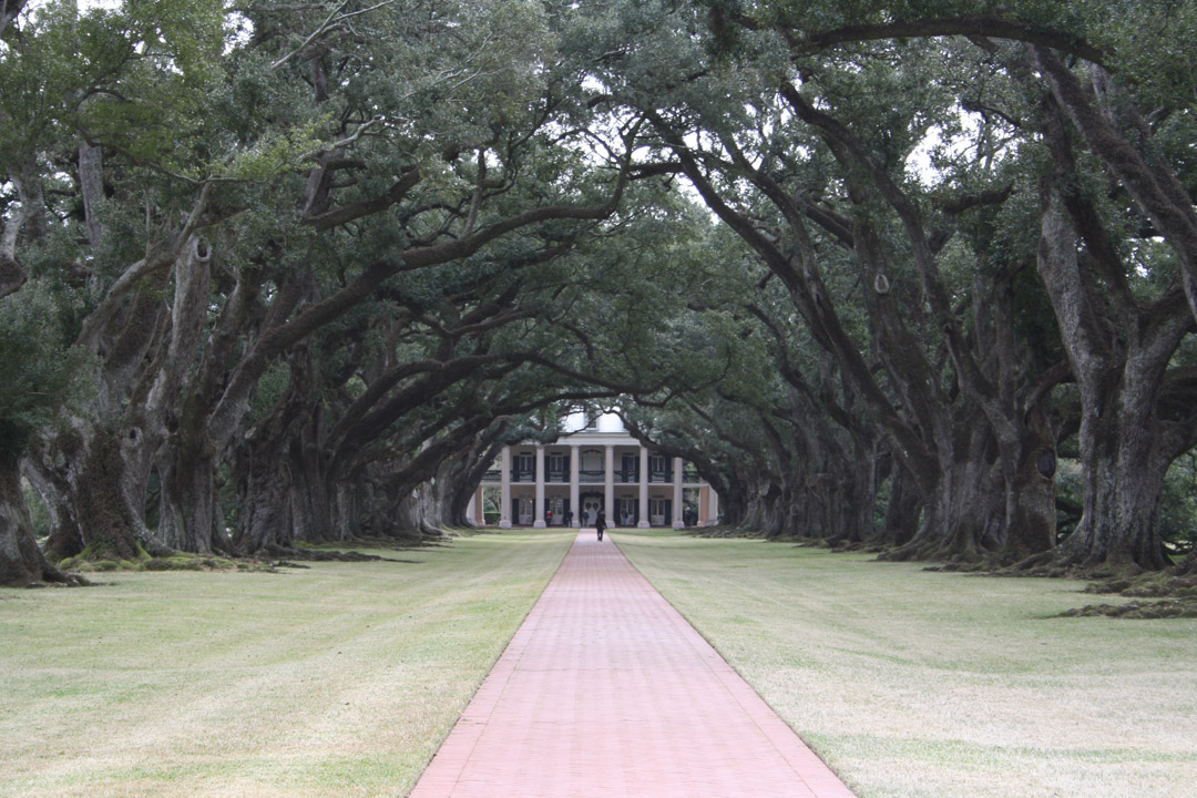 Oak Alley Plantation Interview With A Vampire Cartoon and Horror: ON...