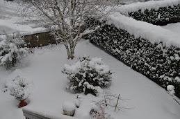 Il mio giardino sotto la neve