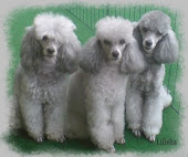 My Poodles, Line, Martine, Anna