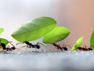'Preguiçoso, aprenda uma lição com as formigas! Elas não tem líder, nem chefe, nem governador, mas guardam comida no verão, preparando-se para o inverno. Preguiçoso, até quando você vai ficar deitado? Quando vai se levantar?' [Provérbios 6:6-9]