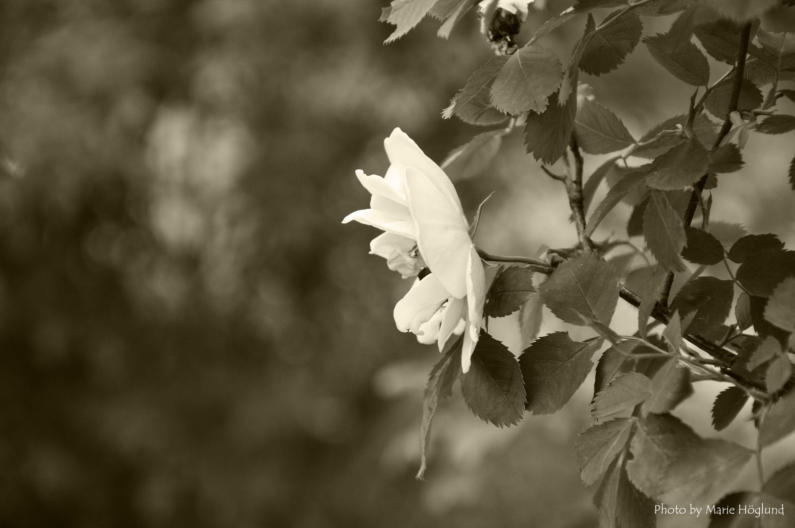 Carpe diem i never promised you a rose garden for I never promised you a rose garden movie