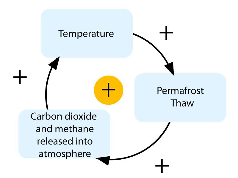 St Joseph Environmental Science: A Nitrogen Cycle activity & the ...
