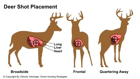 Deer Organ Chart http://whitetaildeerpassion.blogspot.com/2010/09/make-your-first-shot-count.html