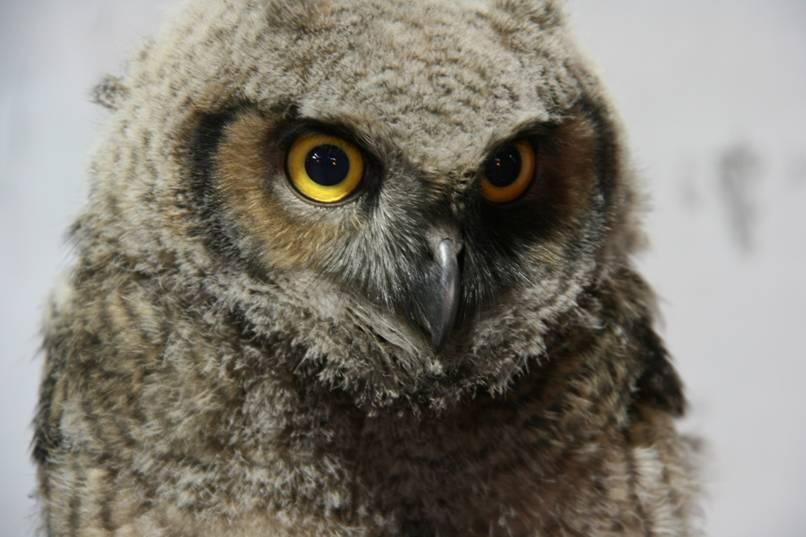 [owl.aspx]