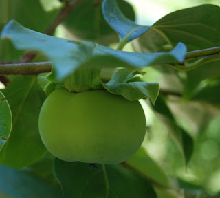 Летняя блузка-майка из трикотажа-масло и зеленая экскурсия по южному саду