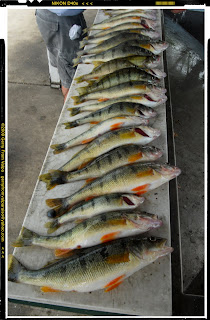 Life in the great midwest august 2010 for Lake michigan perch fishing report