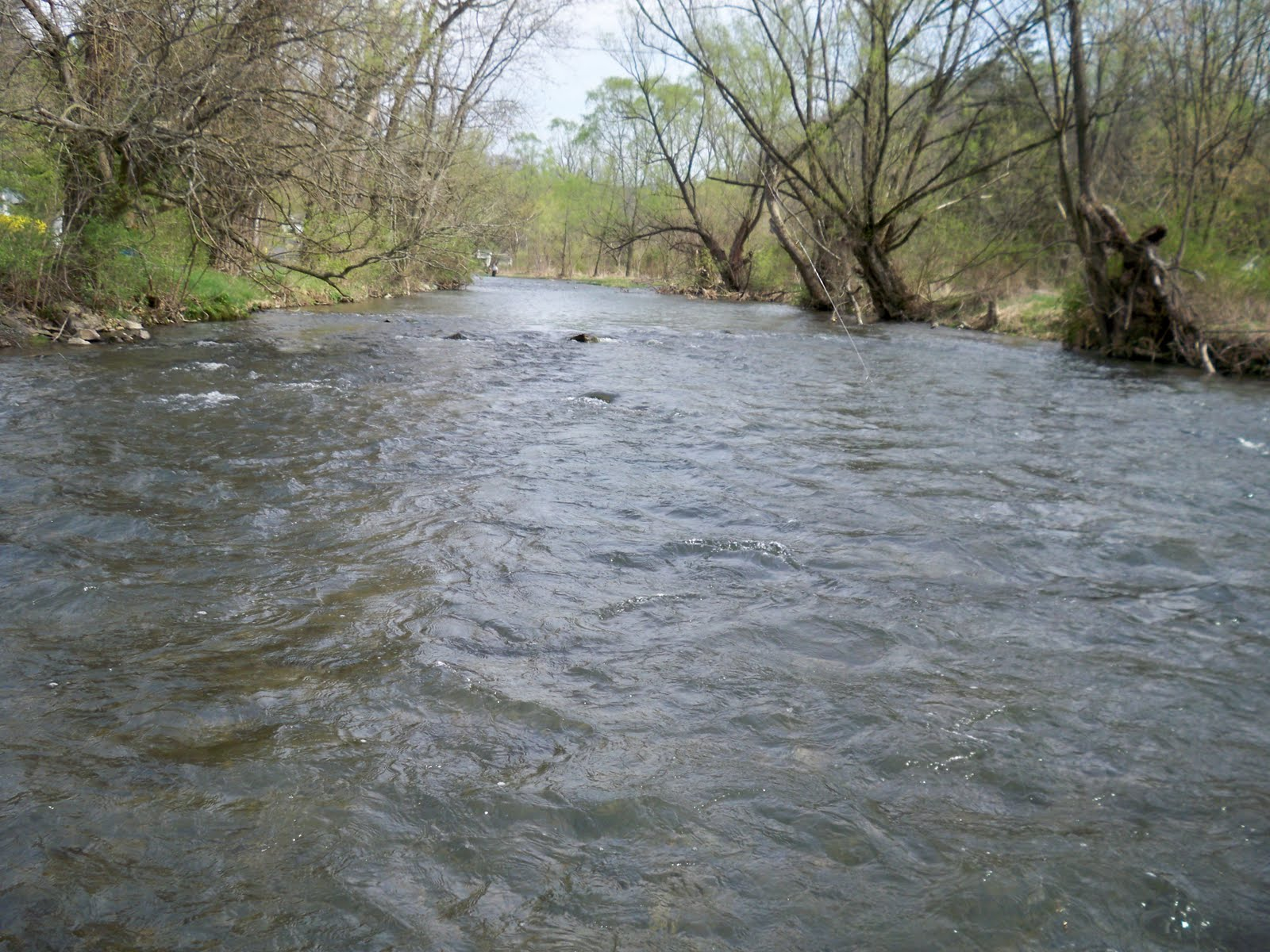 grobe anglers and adventures spring creek fishing report