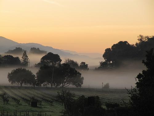 Napa Valley by seligmanwaite